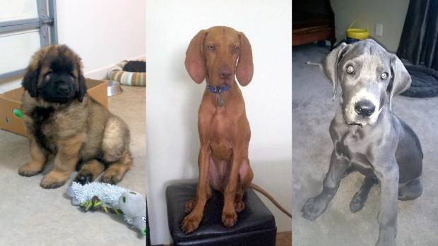 Floyd, Cooper and Nessie are at that age when legs are a little wobbly. Sometimes it's safer to sit.