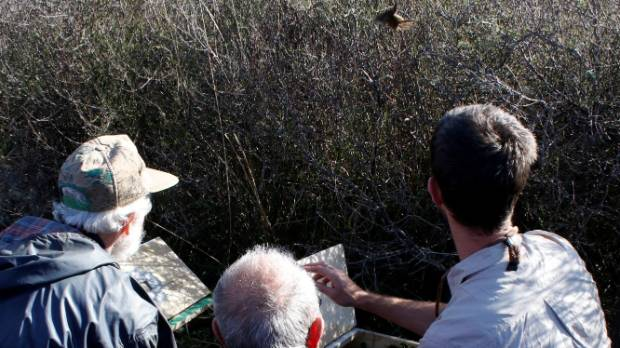 Members of Pauatahanui Reserve Committee release a fernbird.