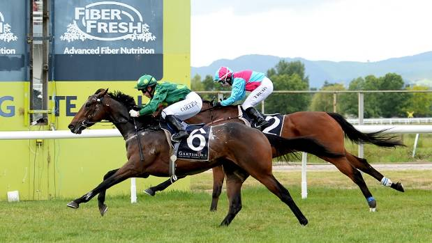 Hiflyer, winning here on his home track Te Aroha, has impressive winning form for the Manco Easter Stakes at Ellerslie.