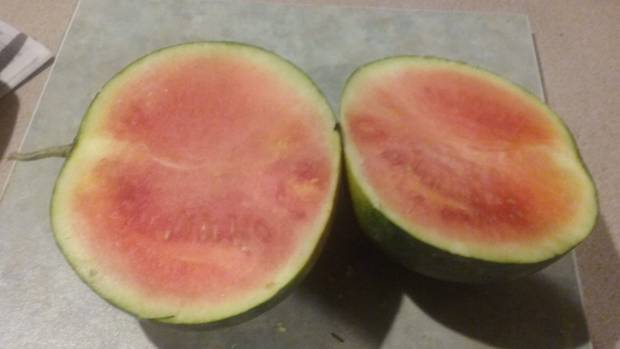 Watermelon grown by NZ Gardener reader Kirsten McIntyre, in Tapanui.