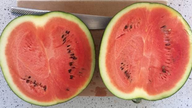 Watermelon grown by NZ Gardener reader Laurel Swan in Wairarapa.