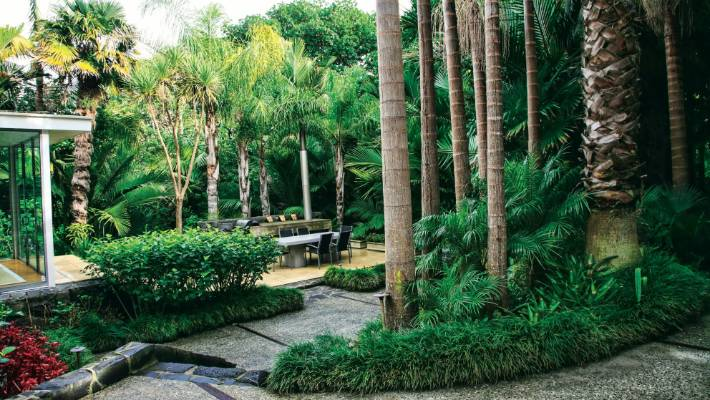 Garden Of The Week A Subtropical Haven On Auckland S