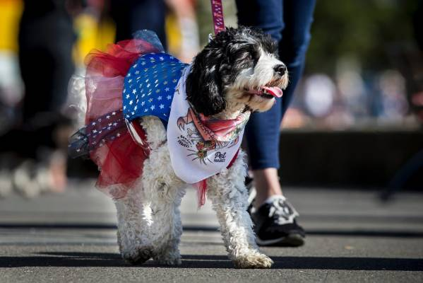 Some dogs put on their Saturday best for the big event.