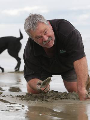 Southland District Mayor Gary Tong gathers toheroa on Oreti Beach. They will be cooked up for a Riverton RSA Anzac ...