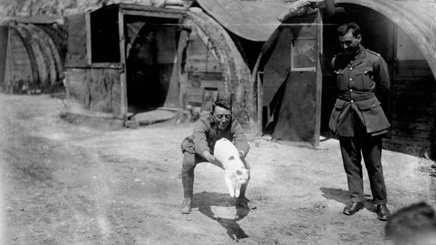 Troops of the New Zealand Tunnelling Company play with their mascot, Snowy, near Arras, France, in 1918.