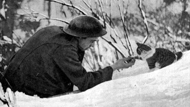 A British soldier plays with his camp's mascot cat in 1918.
