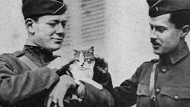 American soldier is World War I meet a cat rescued after a battle.