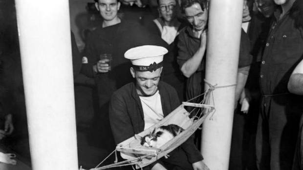 On the US ship Hermione in World War II, ship's cat Convoy was a mainstay of the crew. So he was issued with full kit, ...