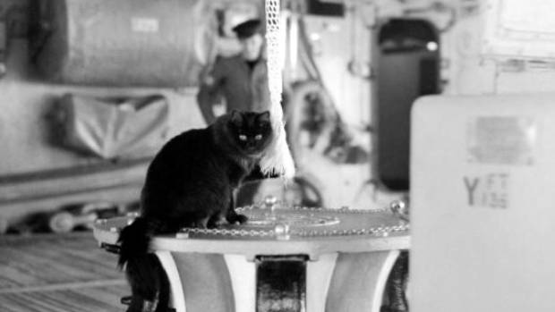 Tiddles poses on his favourite place, the capstan of HMS Victorious. He travelled about 50,000km in his naval career. ...