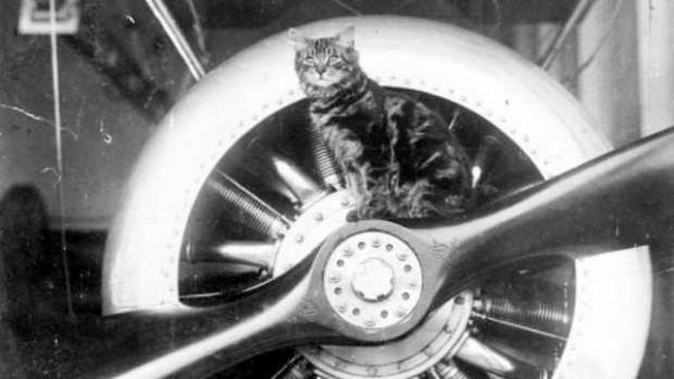 Pincher was mascot of HMS Vindex during World War I. He's pictured on the propeller of one of the seaplanes carried by ...