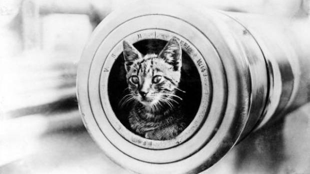 Gentleness amid the horror of war: the ship's cat of HMAS Encounter looks down the barrel.