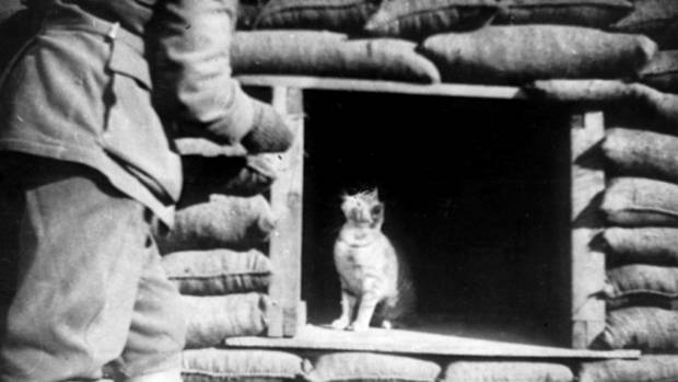 Cats in War