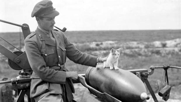 A British officer with a kitten during World War I. Cats were often adopted as companions, mascots or mousers.