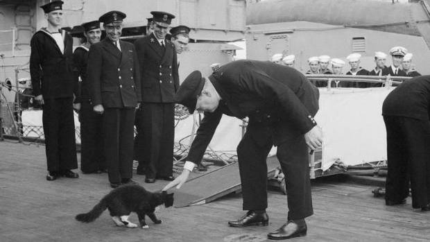 Winston Churchill stoops to pet Blackie, ship's cat on Prince of Wales, in 1941. The gesture turned Blackie into a celebrity.