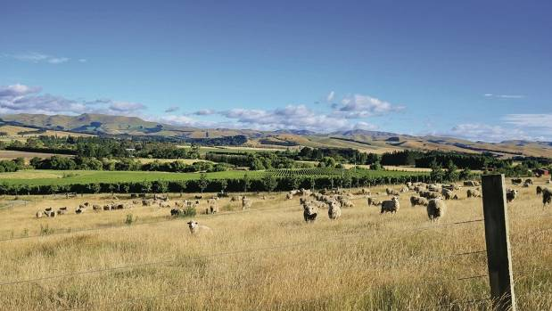 A neighbouring organic sheep farm makes for some relaxing viewing.