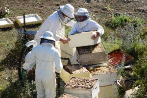 Alison and Peter Bell and son Tom working bees in the Mackenzie Country.