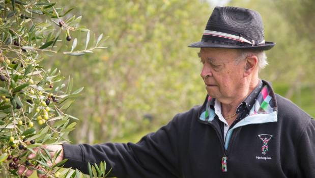 Azzuro Groves co-owner Kerry Hart checks out the olive trees.