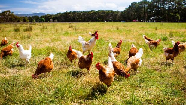Mainland Poultry is selling a majority stake as it prepares to switch from cage-reared egg production.