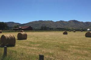Three years ago dryland sheep and beef farmers in the Hurunui region were being asked to limit increases in their ...