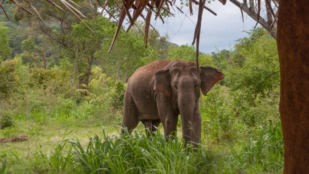 Kiwis in flight: Glamping with elephants in Sri Lanka