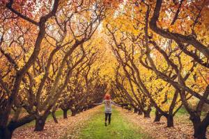All around Central Otago, the land shifts into a rainbow of reds and golds.