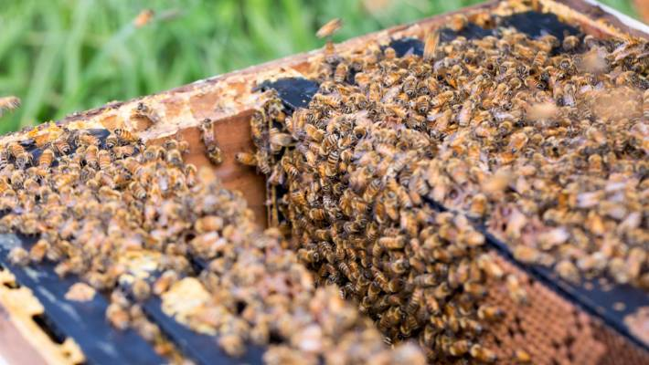 beehive invention tipped to revolutionise honey industry stuff co nz
