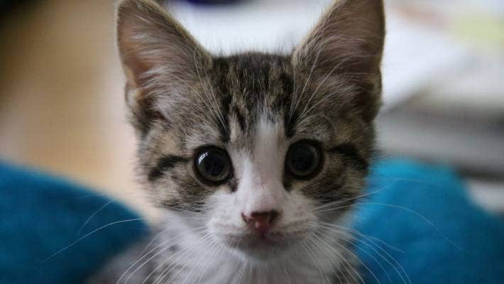 Ask Dr Bruce Chard At What Age Can I Let My Kitten Go Outside Stuff Co Nz