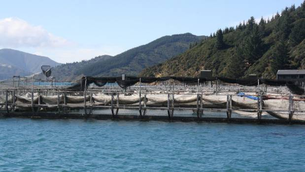 A New Zealand King Salmon farm in the Marlborough Sounds.