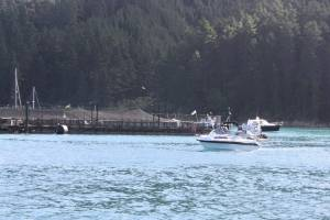 A protest flotilla near a salmon farm in the Marlborough Sounds earlier this year. (File pic)