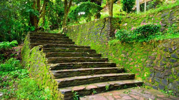 Mossy walls add character to gardens but moss on paths and steps can be slippery.
