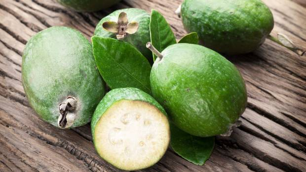 Jane Matthews froze a 20 litre bucket of feijoa - but still had much more to get rid of. She took some in to her ...