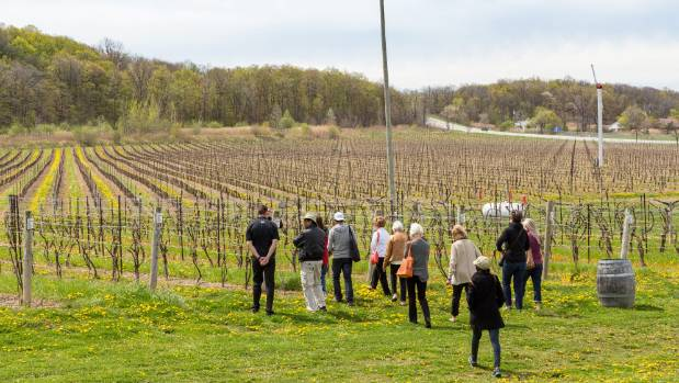 The vineyard-draped land surrounding the Niagara College Teaching Winery, Canada's only fully-licensed teaching winery, ...