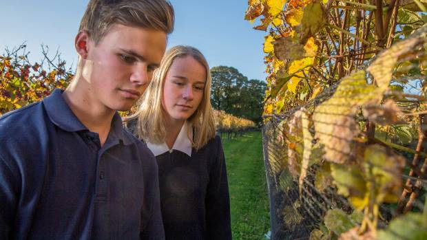Anaru Anderson and McKynlee Breen inspect vines at the Nelson Marlborough Institute of Technology.