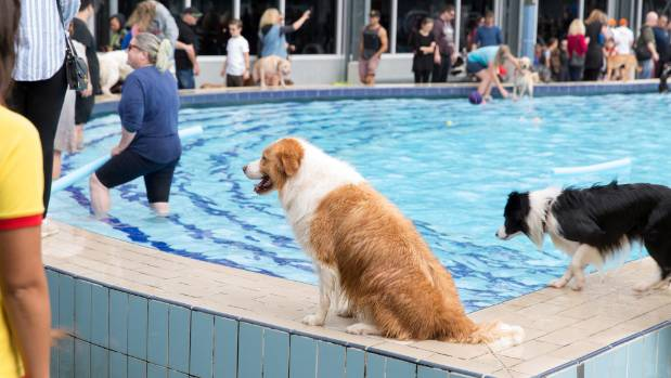 Community events like Dog Day Out or The Big Dog Walk are a sure sign that your new neighbourhood is a pet-friendly place.