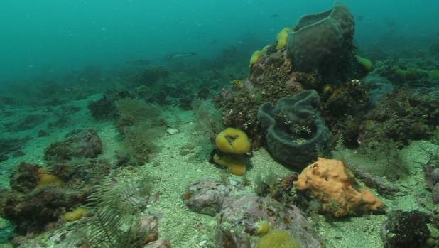 The seabed 500 metres from Kaitira in the Waitata Reach of Pelorus Sound, where NZ King Salmon wants to relocate salmon ...