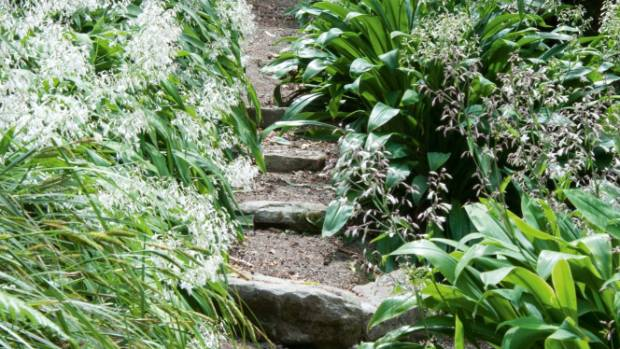 An early feature of the garden was this native rengarenga walk; Jill's paths have grown more generous at her grandson's ...