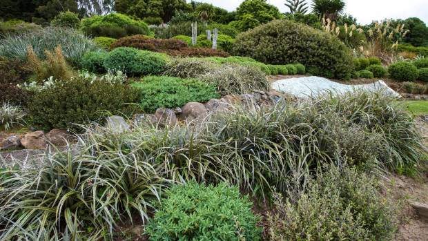 Native astelias relish the dry, exposed conditions and Jill has amassed quite a collection, including Astelia nivicola, ...