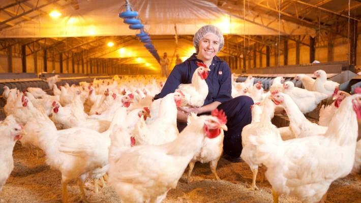 Poultry Mistreatment Wont Happen At New Farm And Hatchery Cobb