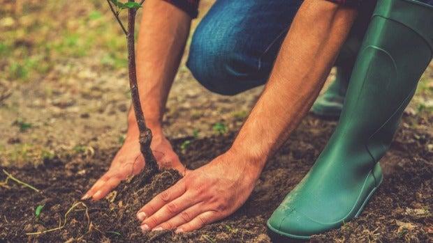 Plant fruit trees now.