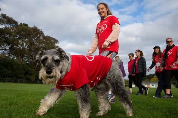 Lucy the schnauzer dog being walked by Charlotte Lobb, 12,
