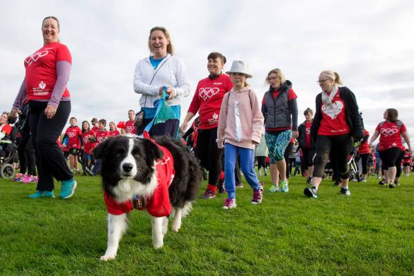 The Massey Vet School go walking with Pixel, a border collie being reigned in by Emma Scott.