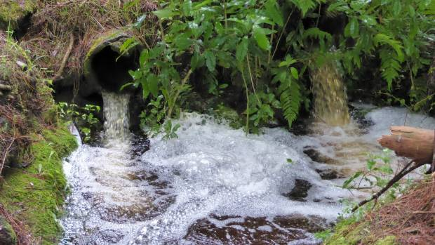Dairy farm runoff entering a subsidiary of Fish Creek. High E coli levels have been found in the creek, which flows into ...