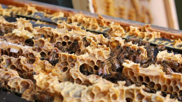 Beekeepers in Auckland are suffering sudden mass deaths of their bee colonies.