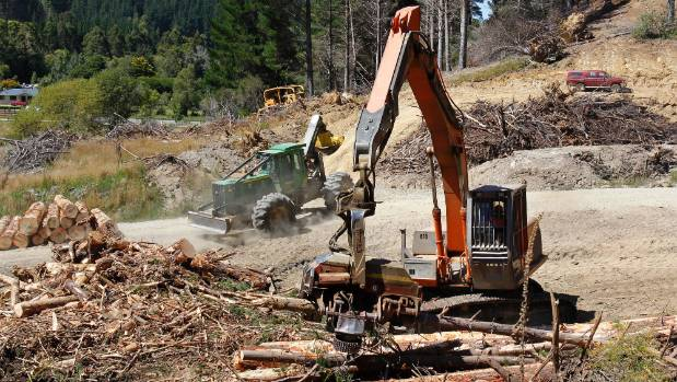 Forestry is a growth industry in Marlborough but companies are struggling to find young workers.
