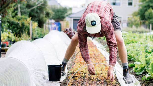Turning waste into compost, Cultivate Christchurch keeps the city clean and green.