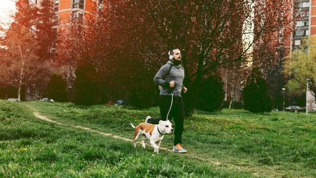 In city neighbourhoods, it's especially important to seek out parks and reserves where you and your pooch can get a run ...