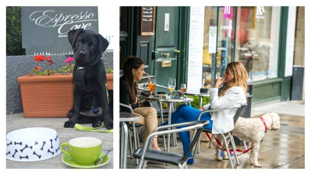 Check out the local restaurants and cafes. Water bowls set near the outside tables or dog treats in a jar let you know ...