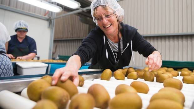 Packhouse worker Shona Bills checks over this year's crop.