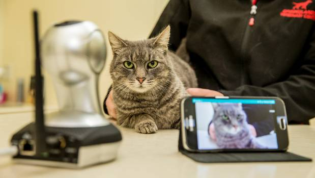 Alfie the cat puts the spy camera to the test at Springlands Veterinary Centre.