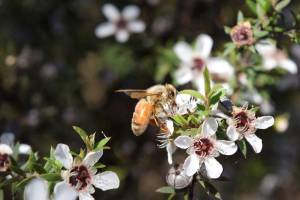 A target has been set of $1.2 billion export revenue for manuka honey alone by 2028.